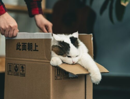 A Guide To Moving With Pets